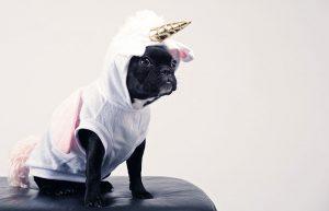 adorable-animal-canine-1564506